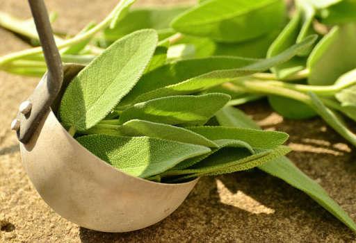 Aceite de Salvia