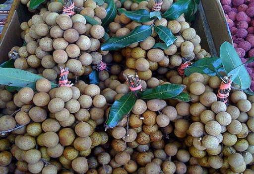 Longan Berries